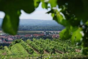 wijngaard sepp moser in oostendijk