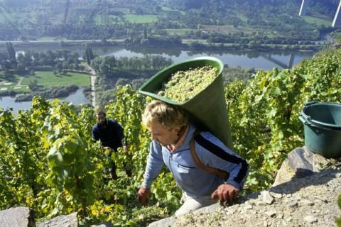 (Foto Informatiebureau voor Duitse Wijn)